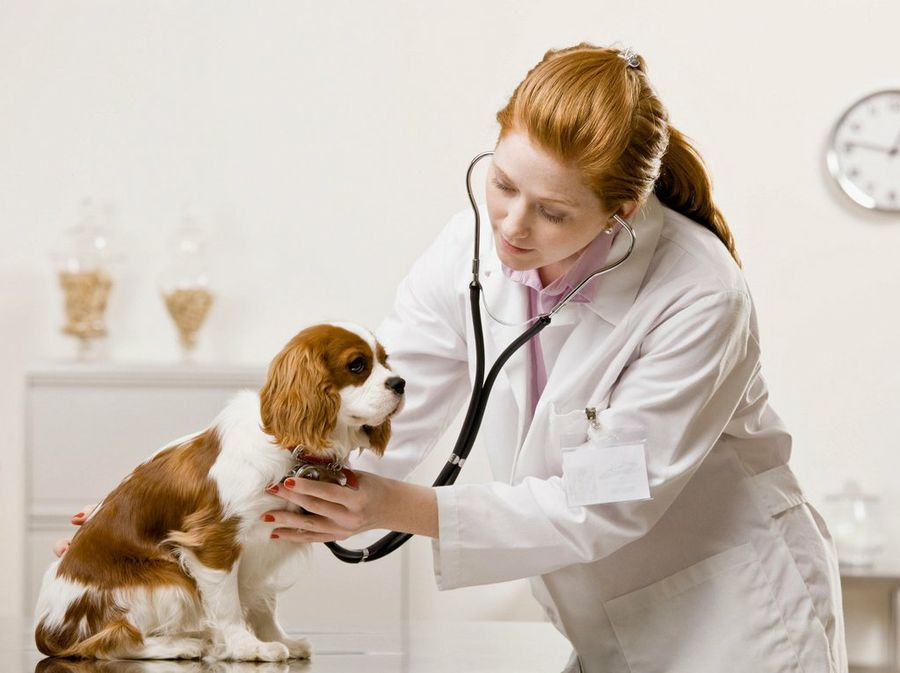 Animal Healthcare Market Enhancement and Global Outlook 2019 to 2025