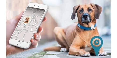 Image result for An Overview Of Pet Technology