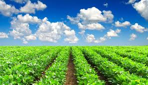 Agricultural Microbials Market: Trends, Demand, Analysis & Forecasts to 2025- Novozymes, BASF, Sumitomo Chemical, DOW Agrosciences