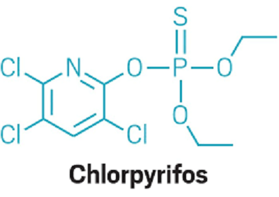 Chlorpyrifos Market Overview, Growth and Analysis Research Report 2019 – 2025