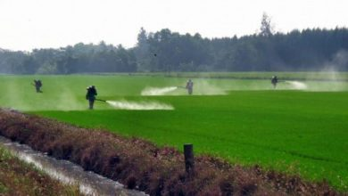 Global Chlorpyrifos Market