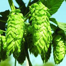Global Hops Extract,Solid Market Professional Research Report 2018-2023-Bayer,Orphee Medical,Drew Scientific,Heska