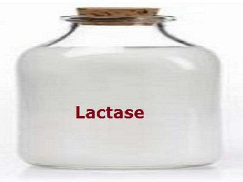 Lactase Market Set To Rise in the Period from 2019 – 2025; Sternenzyme, Calza Clemente