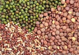 Vegetable Seed Market Key Manufacturers Analysis 2019-2025
