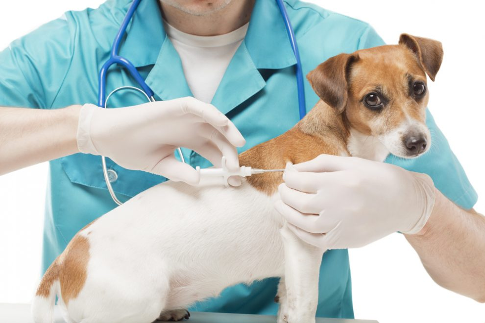 Veterinary Vaccines Market Analysis of Rising Business Opportunities with Prominent Investment Ratio by 2024