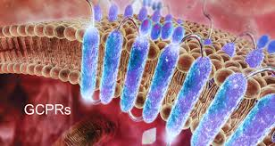 Latest Market Research 2019: G-Protein Coupled Receptor (GPCR) Targeting Market with Global Leading Key Players – Promega, Qiagen, Abcam, Corning, Cisbio, Discoverx