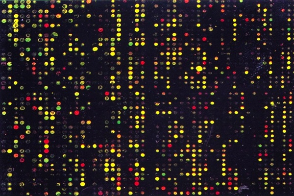 Global Microarray Market 2019- Business Plans, Inventive Technology, and Growth Factors