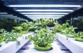 Industry Overview Global Horticultural LED Lighting Market 2018 Production, Import-Export Analysis, Revenue and Market Value