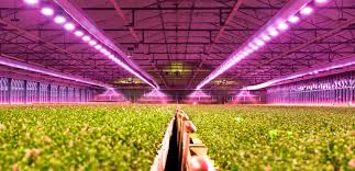 Horticultural LED Lighting Industry Outlook 2019 to 2024 –  Updated Research Published By Globalmarketers