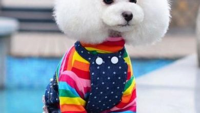 Pet Clothes Market