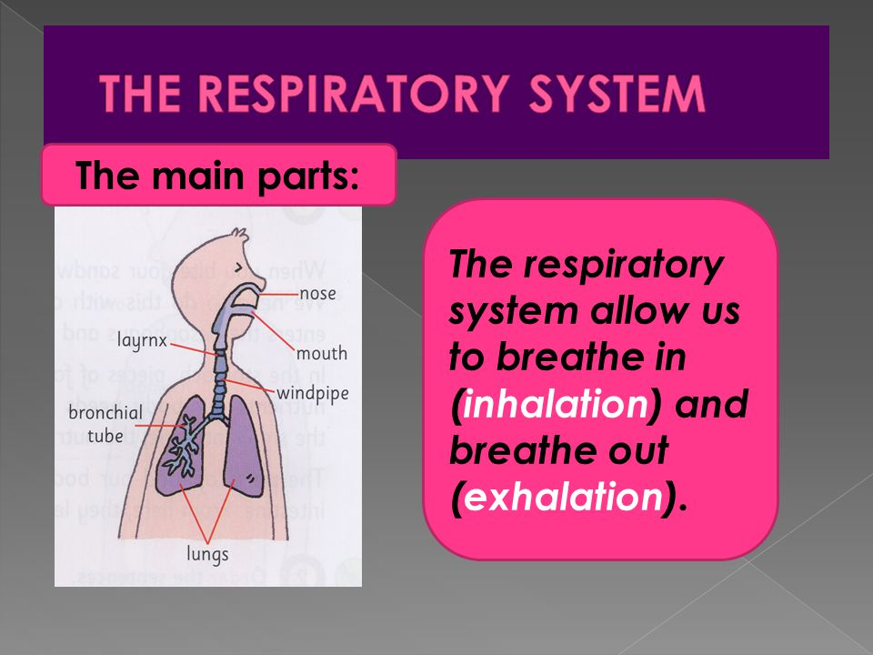 US Inhalation Systems Market – Drivers, Restraints, Opportunities, Trends, and Forecast: 2018–2024