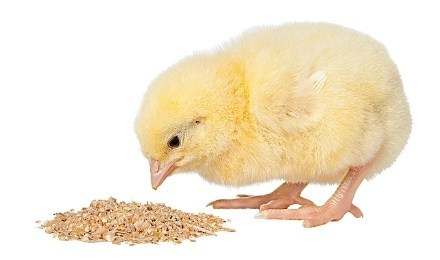 Latest Trends In Animal Eubiotics Market 2019 | Toop Leading Players: Chr. Hansen, DSM, Cargill, Kemin, BASF, Behn Meyer