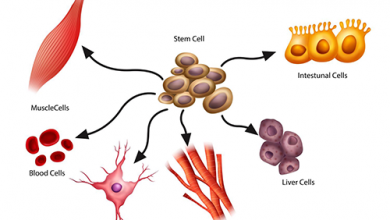 Stem Cell Source