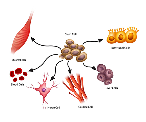 Latest Research On Stem Cell Source Market 2019 | Top Leading Players: BD Bioscience, Beckman Coulter, Ge Healthcare, Merck Millipore, Miltenyi Biotec, Pluriselect Life Science, Sigma-Aldrich Corporation