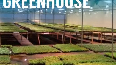 Smart Greenhouse Market